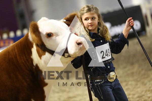 Pennsylvania Cattlemen's 2014 Steer Ring Shots