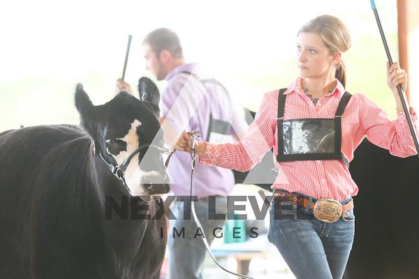 2017 Heifer Ring Shots