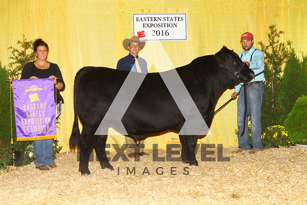 2016 Angus Backdrop