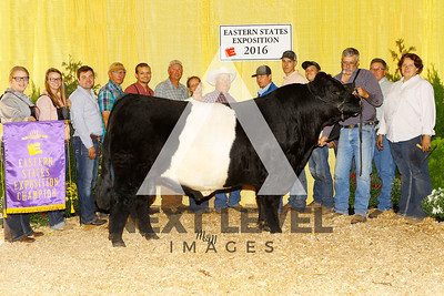Ch_Belted_Galloway_Bull_B150400