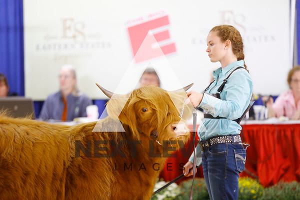 2016 4H Beef Show Ring Shots
