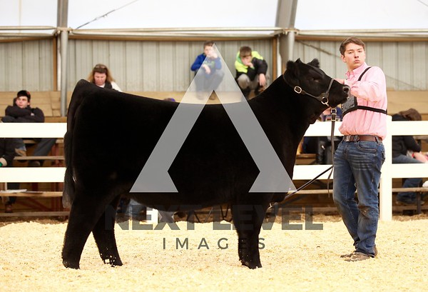 2017 Heifer Ring Shots