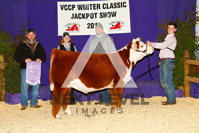 Res_Hereford_Steer_Ian_Forbes_B170588