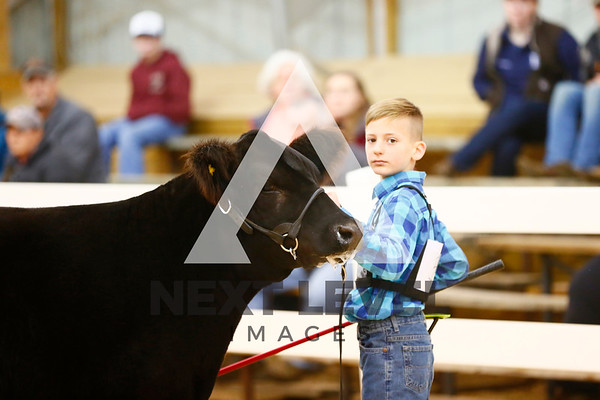 2018 Steer Ring Shots