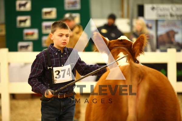 VCCP 2014 Heifer Ring Shots