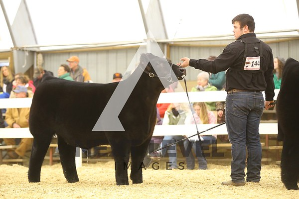 VCCP 2015 Steer Ring Shots