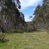 Grassy firetrail