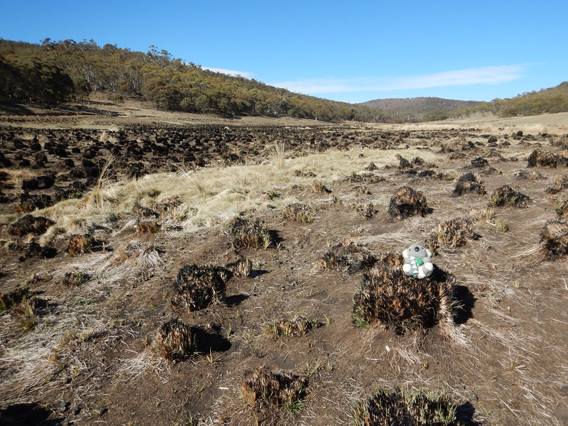 """""""Some areas were burnt in late Autumn this year"""", said Barkley"""