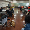 Elementary Education and Reading students meeting with Paws of Love dogs and handlers at Buffalo State College.