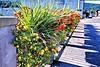 DSC_0287rkwdflowers