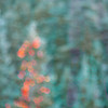 RickyTims-OutOfFocus-Week 2