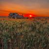 Homestead Sunrise