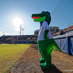 Albert the Gator watches on during pre-game as the #2 ranked Gators defeat the #7 Florida State Seminoles 12-6 at McKethan Stadium.  February 16th, 2017. Gator Country photo by David Bowie.