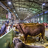 Cattle Barn-3954