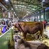 Cattle Barn-3953