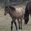 AB. Wildies Foal from Outcast Band iMovie