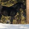 Ab.Wild Horses - Feb. 28