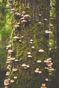 Gill mushrooms