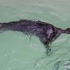 181130 Aquarium Rescue 2