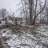 180406 Ash Trees 1