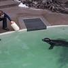 181130 Aquarium Rescue 1