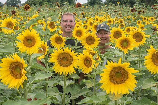 180814 Sunflowers of Sanborn 1