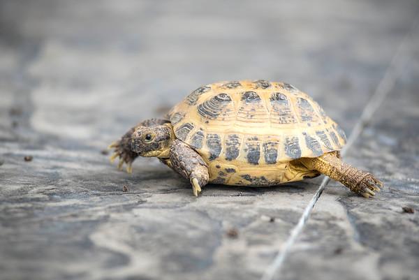 180920 Turtle 2