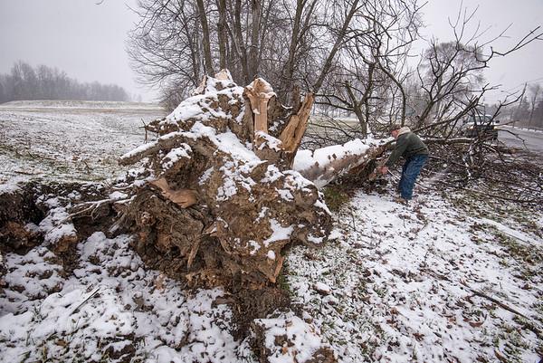 180406 Ash Trees 2