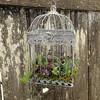 Birdcage Medium