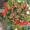 "12"" Hanging Basket"