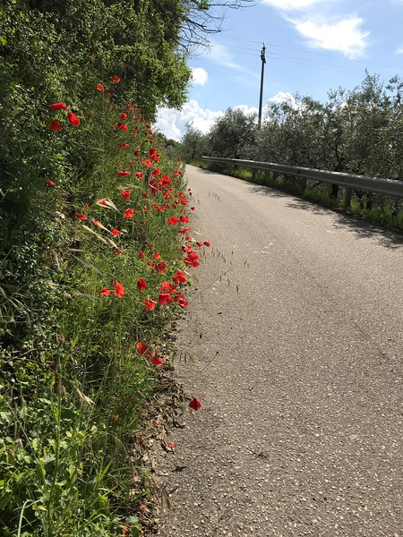 Road from Spello to Collepino