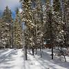Snowshoeing at Bumping Lake