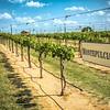 Grape Creek Winery-0217