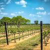 Grape Creek Winery-0220