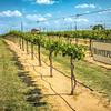 Grape Creek Winery-0218