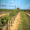 Grape Creek Winery-0219