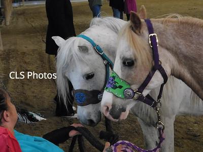Mini Horse show AMHA