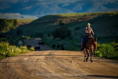 2018 Ruby Dell Ranch Cattle Drive - Day 2