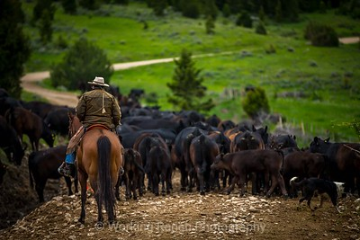 2018 Ruby Dell Ranch Cattle Drive - Day 3