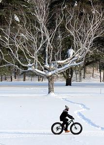 IMG_0194 bike the  tree