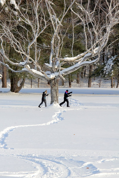 Cross-Country Skiing, Snowshoeing, Fat Bikes