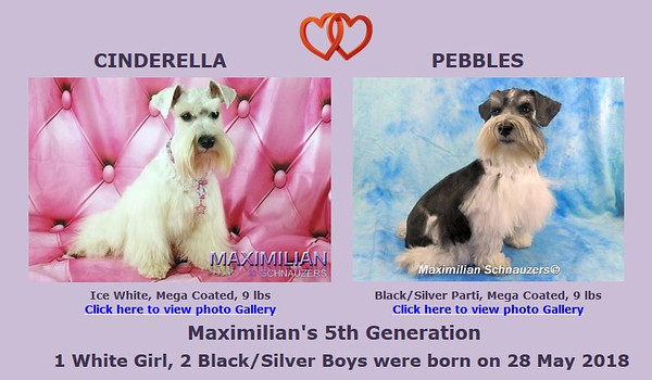Cinderella & Pebbles Puppies, DOB 5/28/2018