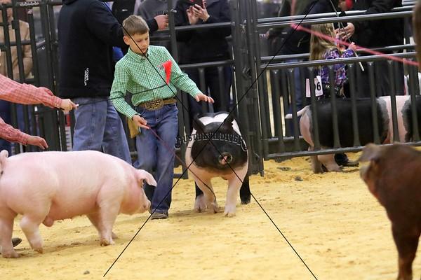 Swine 7