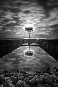 DA065,DB,Lonely tree