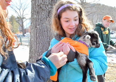 DSC_1152 chelsea McDermott,10, at right,,tries holding a lamb, handed to her by her sister Daphne at left