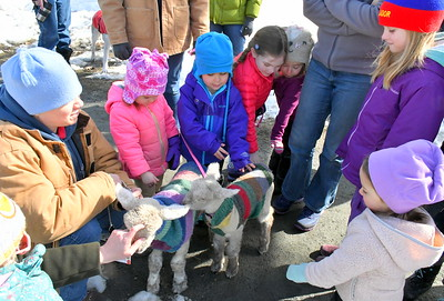 DSC_1118 gather around the lambs