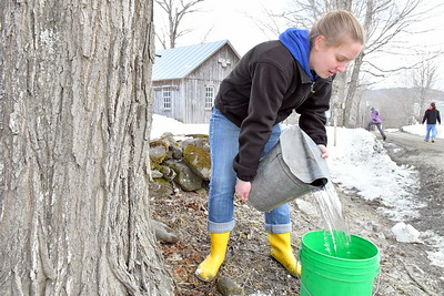 USE_DSC_1785  Mackenzie Ramsdell,,granddaughter of fred doten, gathering sap from the buckets