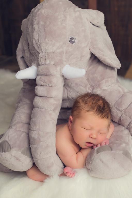 Newman Newborn Session