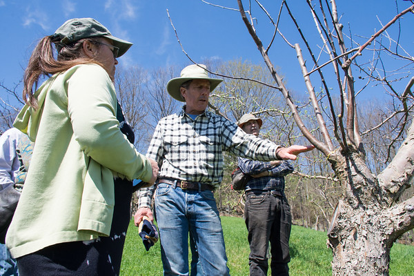 Apple Tree Grafting 051018