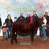 Heifer_ResShorthorn_LDH_0712c